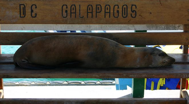 Video: The amazing Galapagos Islands